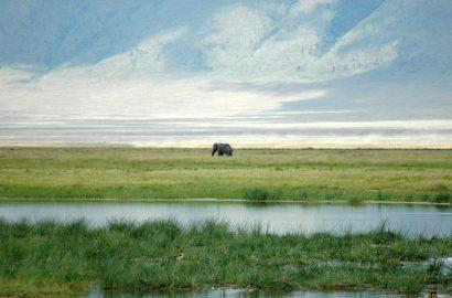 vistas safari